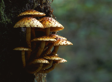 Fungi growing on a tree