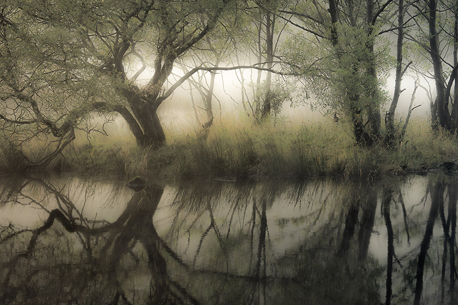Misty riverbank